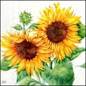 Floarea soarelui (27)